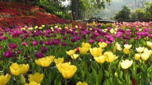 南元休閒農場花園景色,作為封面代表