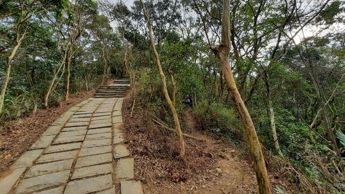 右側有泥土山徑,左側有石階步道
