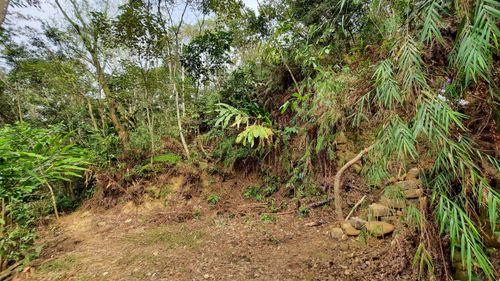 圓弧區域岔路,左為泥土小徑,右為石砌階梯