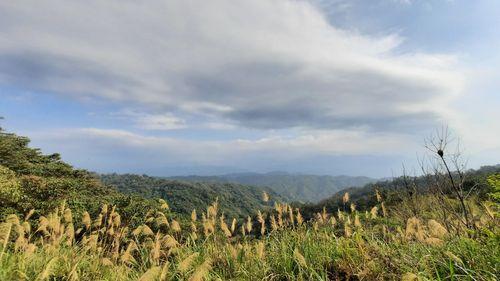 基地台旁景致,上有藍天與大片白雲,中間有遠山,下有芒草叢