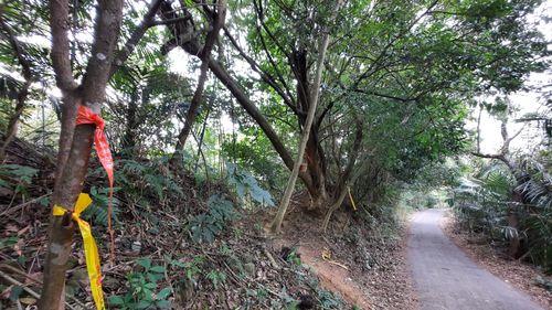 左側O型路線登山口,左側有泥土山徑,右側有條柏油路