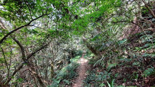 沿途路徑,泥土山徑在中間,兩旁則有綠樹