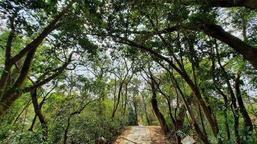 步道沿途石階與綠樹,圖片上方綠樹枝幹遮住多數的藍天,而中間下方則有石階步道