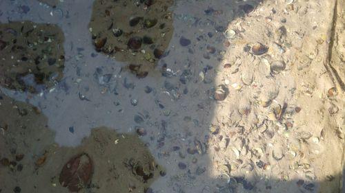 圖中可看見穿龍圳清澈的水質與池底許多的蛤蠣