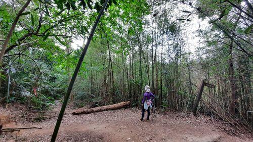 竹林岔路,四周是竹林,中間有個寬廣的泥土區域