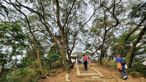 觀日亭,中間有石階步道,兩旁有許多樹木,正中央就是觀日亭