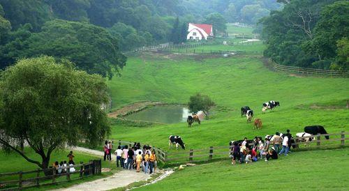 飛牛牧場大草原景觀、圖中有牛、小木屋、池塘