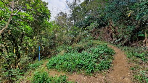 龍鳳連稜岔路,左右都有一條泥土路