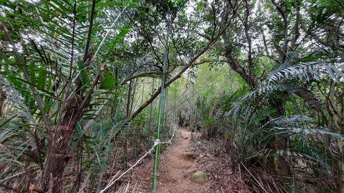 O型步道路徑與繩索,中間為泥土山徑一直向上,路的左側有繩索,更左側與右側有綠樹