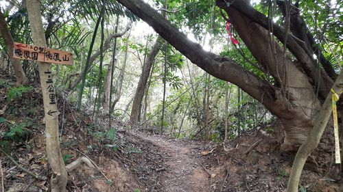 O型登山口正面,左邊有告示牌,中間有泥土山徑,右側有大樹