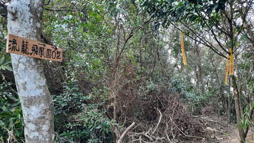 O型路線岔路口,左邊有棵樹幹,樹幹上有標示牌寫著流籠、飛鳳園O型,而右邊是泥土山徑