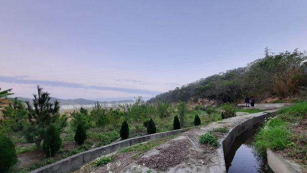 右側有水圳,左側為綠地田野