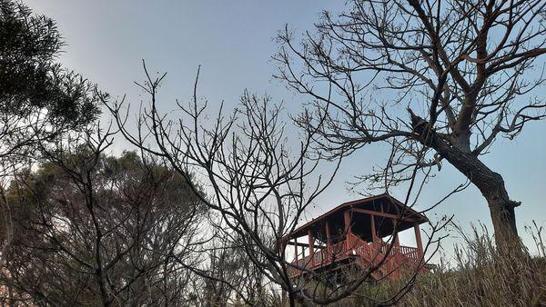 中間的暸望台與周圍的大樹